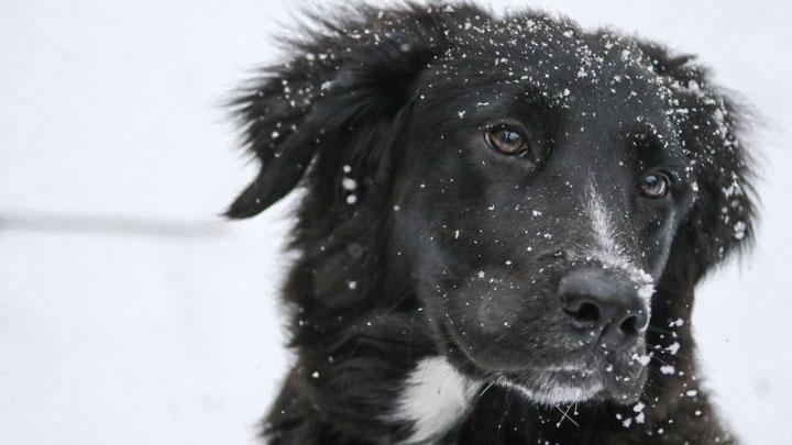 "Dog in Snow: artwork for Randal Eldon Greene's prose poem ""When the Dog Gets Ready to Die"""